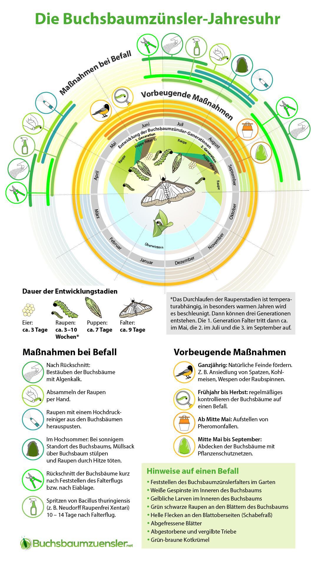 Buchsbaumzünsler Jahresuhr - erkennen, vorbeugen, bekämpfen